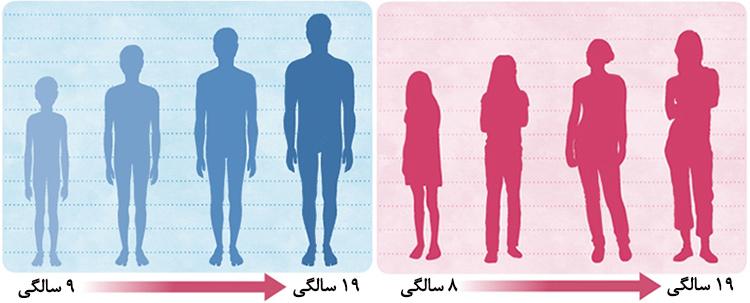 نتیجه تصویری برای سن رشد استخوان ها